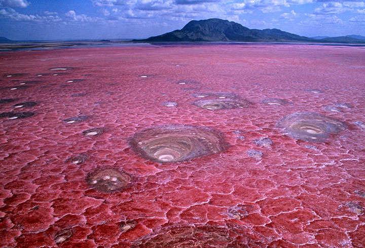 Lake Natron: The Killer Lake That Literally Petrifies The Animals Into Sculptures