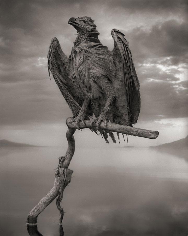 Lake Natron Killer Lake That Petrifies Animals 5