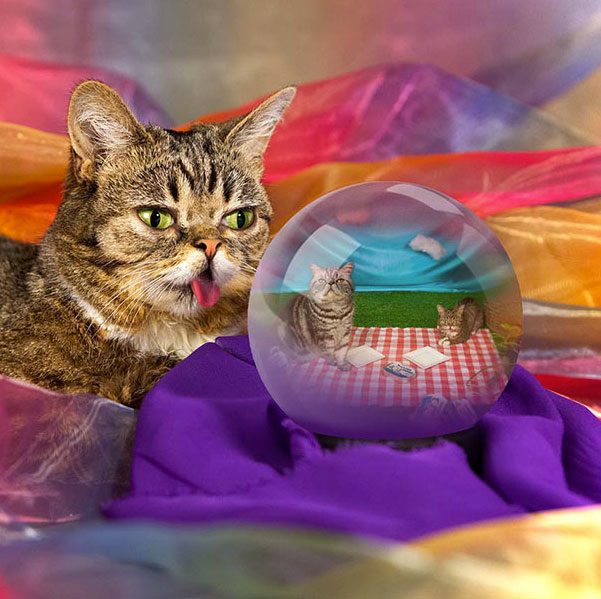 Meet Lil Bub: The Cutest Cat On The Internet