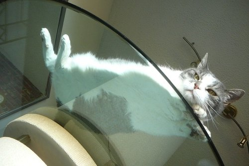 Top 20 Pictures from below Of Cats Sitting On Transparent Glass Tables