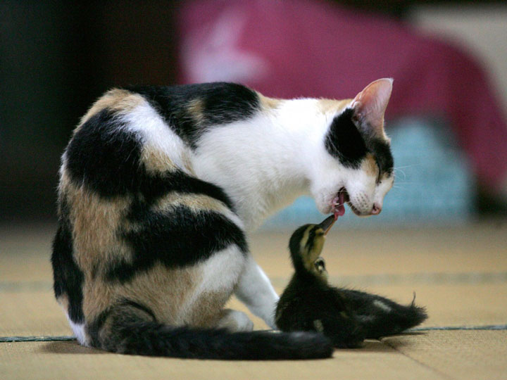 Cat and Chick