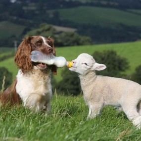 20 Sweet Examples Of Friendship Between Animals Of Different Species (Photo Gallery)