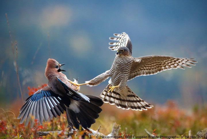 Birds-Award Winning Wildlife Photographs From Wildlife Photographer Contest