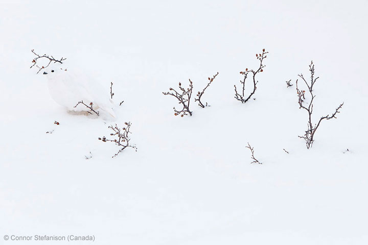 Branches-Award Winning Wildlife Photographs From Wildlife Photographer Contest