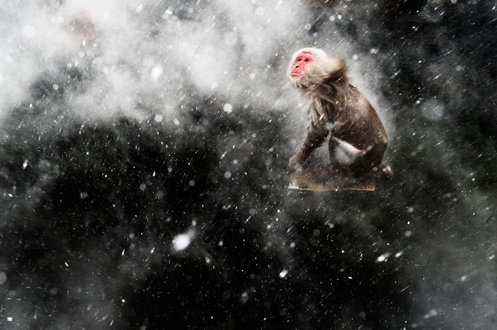 Monkey-Award Winning Wildlife Photographs From Wildlife Photographer Contest