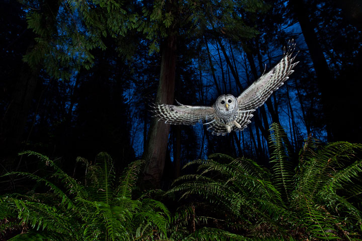 Owl-Award Winning Wildlife Photographs From Wildlife Photographer Contest