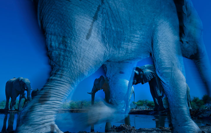 Elephant-Award Winning Wildlife Photographs From Wildlife Photographer Contest