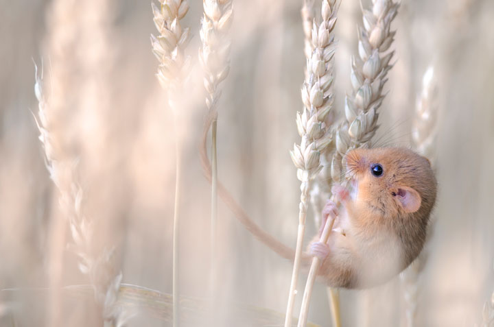 Rodents-Award Winning Wildlife Photographs From Wildlife Photographer Contest