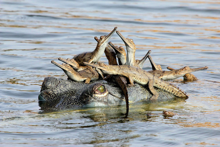 Crocodile-Award Winning Wildlife Photographs From Wildlife Photographer Contest