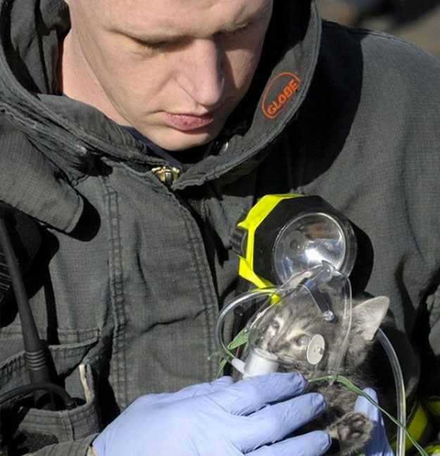 This firefighter gives oxygen to a kitten rescued from a fire-Emotional Charged Photographs That Prove That Humanity Is Not Yet Lost-