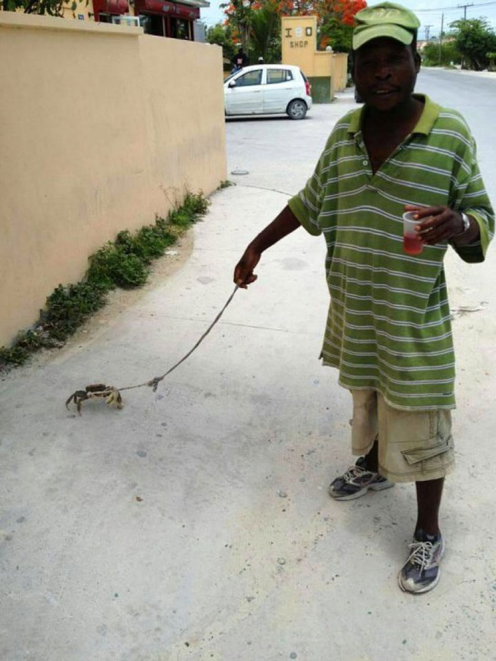 The man who thinks that dogs are too common and prefers walking his crab-25 extreme Hipsters of modern times-1