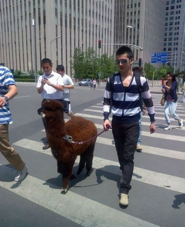 The man who walks his lama in the street-25 extreme Hipsters of modern times-18