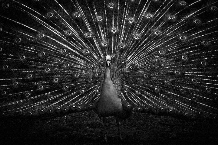 Birds-Mysterious Beauty Of Animals Captured In Striking Portraits -10