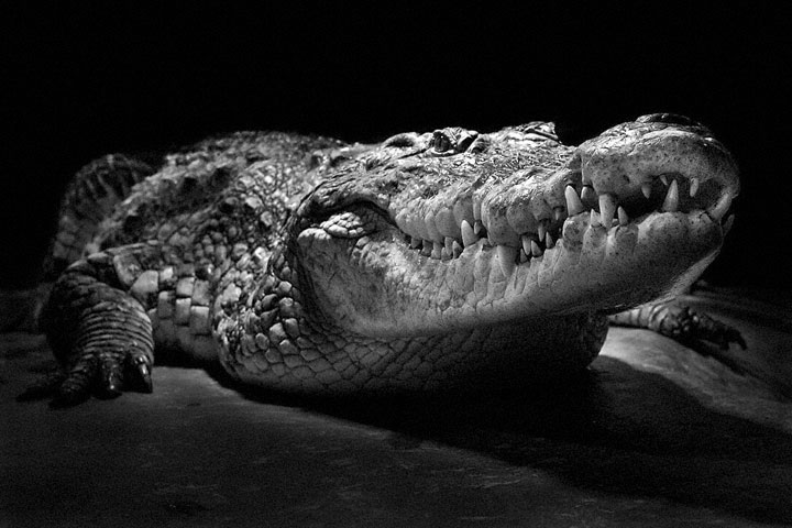 Reptiles-Mysterious Beauty Of Animals Captured In Striking Portraits-35