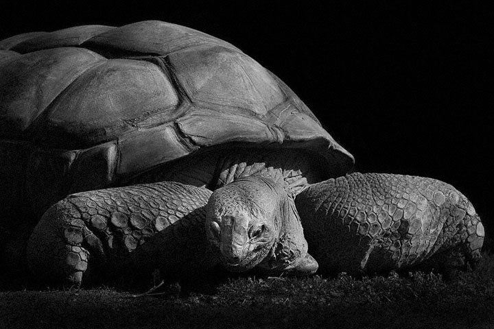 Reptiles-Mysterious Beauty Of Animals Captured In Striking Portraits-37