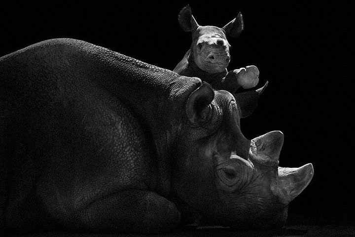 Rhinos-Mysterious Beauty Of Animals Captured In Striking Portraits-38
