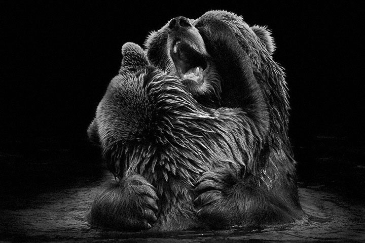 Bears-Mysterious Beauty Of Animals Captured In Striking Portraits-5