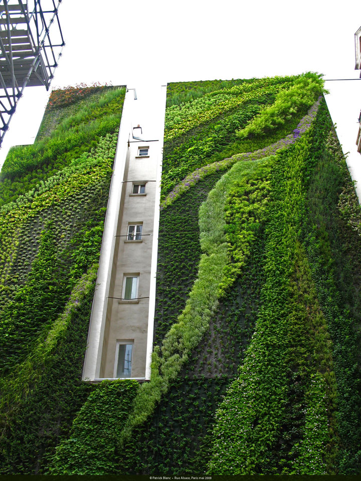 A vertical garden by Patrick Blanc, Rue D'Alsace, Paris, France, 2008