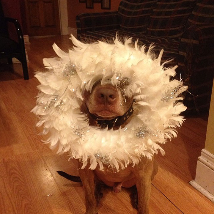 A Dog Owner Takes Funny Photos Of Its Dog By Putting Various Objects On Its Head-14