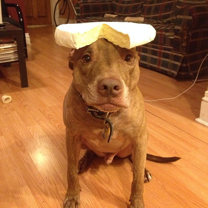 A Dog Owner Takes Funny Photos Of Its Dog By Putting Various Objects On Its Head-19