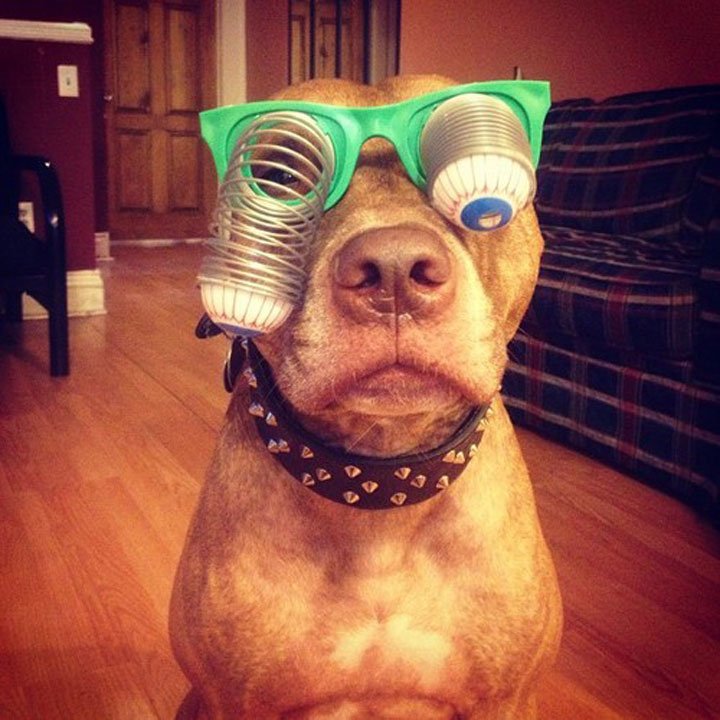 A Dog Owner Takes Funny Photos Of Its Dog By Putting