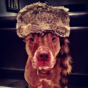 A Dog Owner Takes Funny Photos Of Its Dog By Putting Various Objects On Its Head (Photo Gallery)