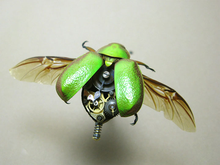 Beetles-Discover The Impressive Bionic Insects From Insect Labs-1