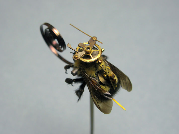 Bees and Wasps-Discover The Impressive Bionic Insects From Insect Labs-14