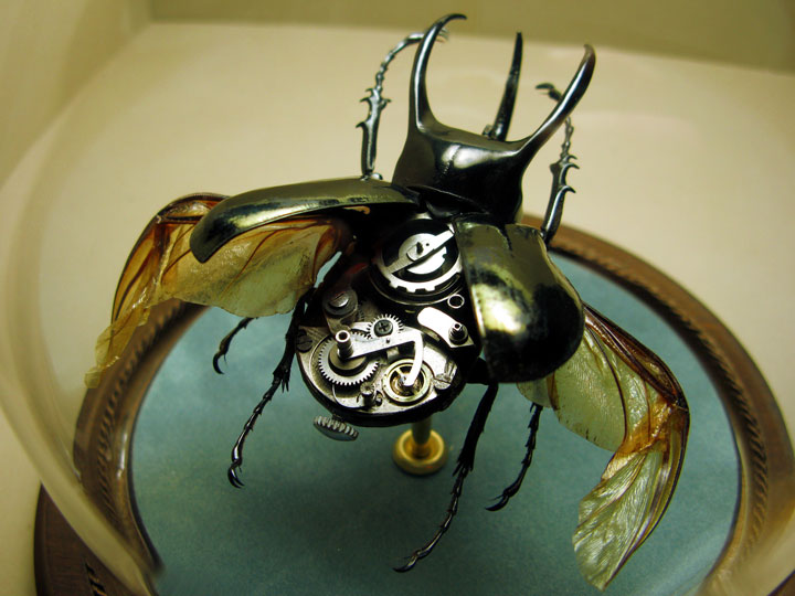 Beetles-Discover The Impressive Bionic Insects From Insect Labs-18