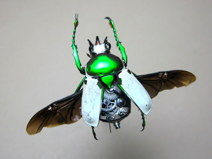 Beetles-Discover The Impressive Bionic Insects From Insect Labs-19