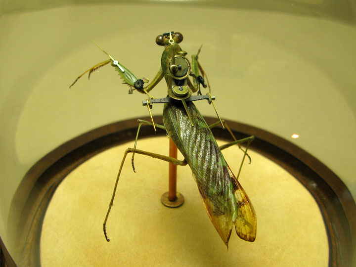 Mantids-Discover The Impressive Bionic Insects From Insect Labs-21