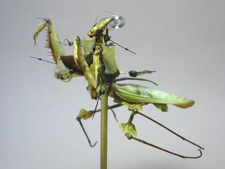 Mantids-Discover The Impressive Bionic Insects From Insect Labs-22