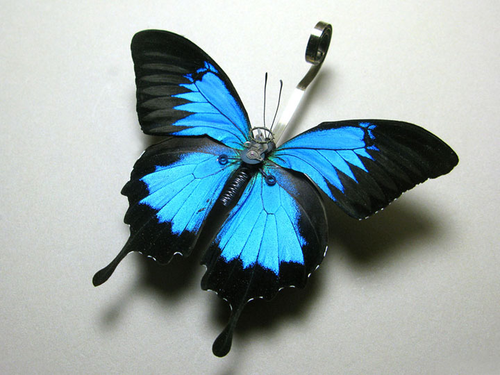 Butterflies-Discover The Impressive Bionic Insects From Insect Labs-23