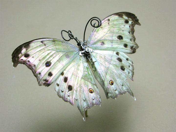 Butterflies-Discover The Impressive Bionic Insects From Insect Labs-24