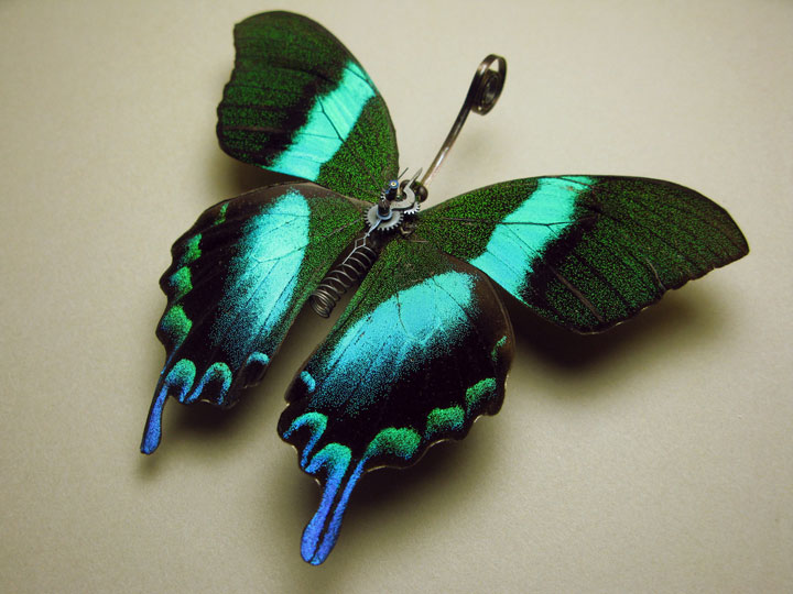 Butterflies-Discover The Impressive Bionic Insects From Insect Labs-25