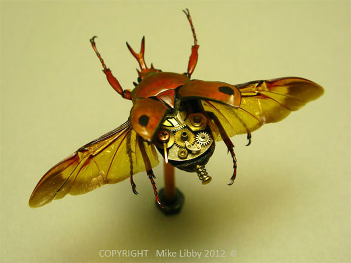 Beetles-Discover The Impressive Bionic Insects From Insect Labs-3