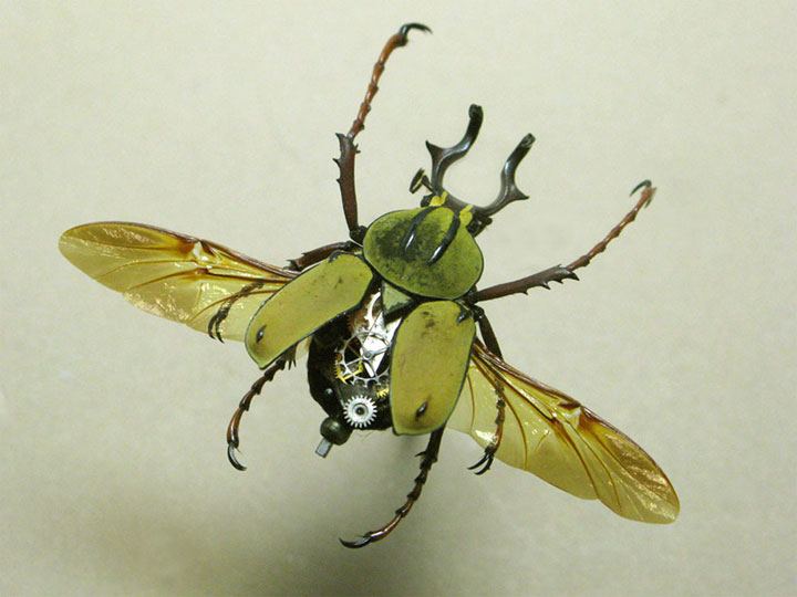 Beetles-Discover The Impressive Bionic Insects From Insect Labs-4