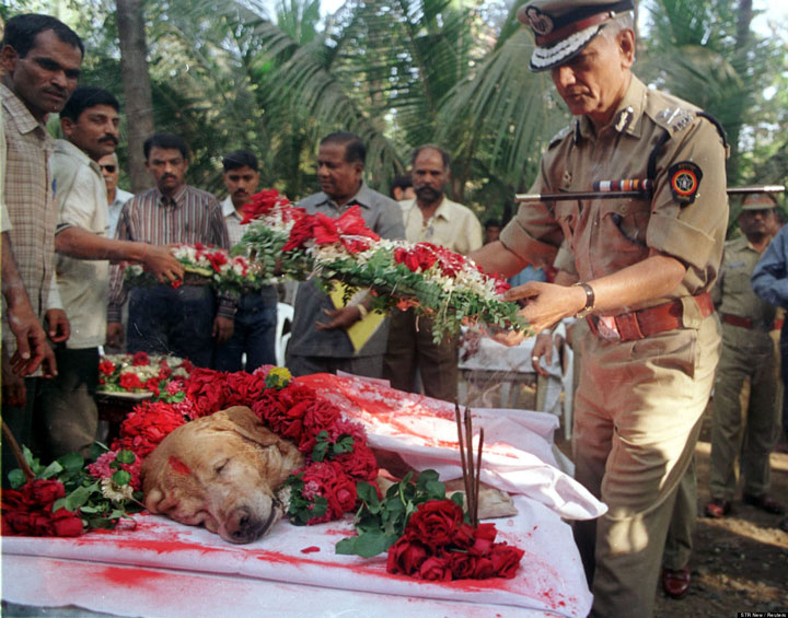 The majestic funeral of Zanjeer, a dog who saved thousands of lives during the 1993 explosions in Mumbai, India-Most Touching Photographs-9