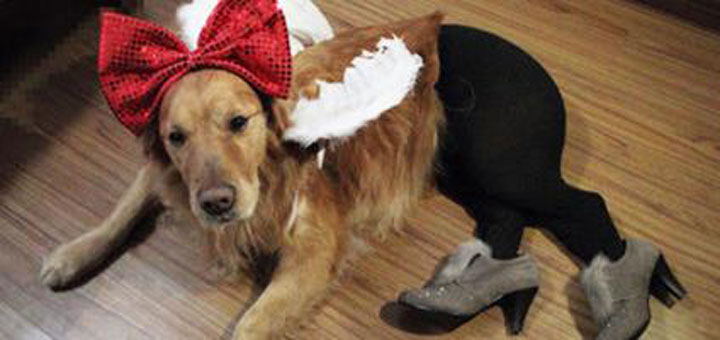 Pet Wearing Tights: New Crazy Fashion On Internet -2