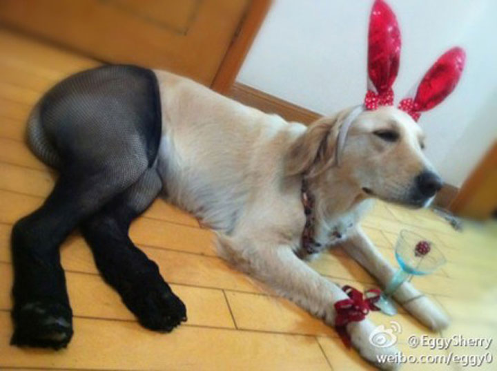 Pet Wearing Tights: New Crazy Fashion On Internet -3