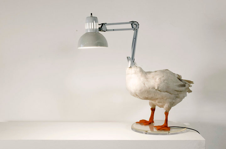 The duck lamp-Super Creative Lamps For Decoration Of Your Home-13