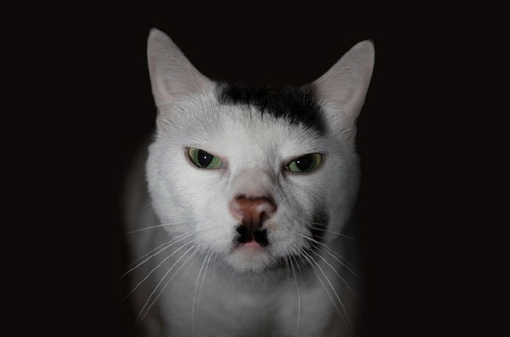 Hitler cats -12 Unique Cats In The World Because Of Unique Markings On Their Fur-13