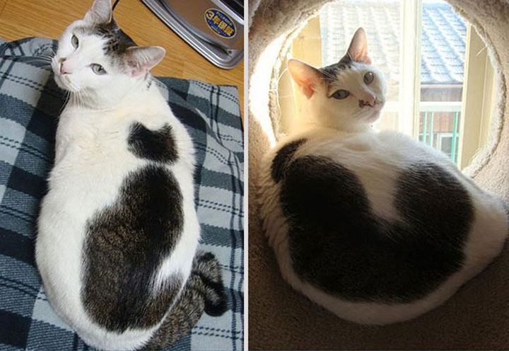 Cat on a cat -12 Unique Cats In The World Because Of Unique Markings On Their Fur-15