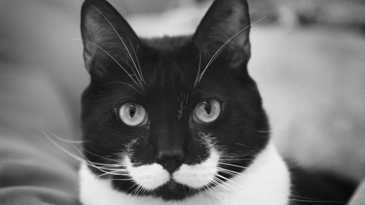 Cat with a mustache -12 Unique Cats In The World Because Of Unique Markings On Their Fur-8