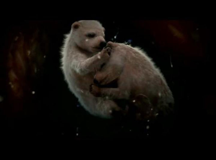 The polar bear-Awesome Photographs Of Baby Animal Fetuses In The Womb-2