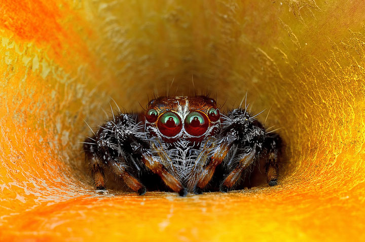 Discover the Beauty Of Spiders Through Microscopic Photographs-12