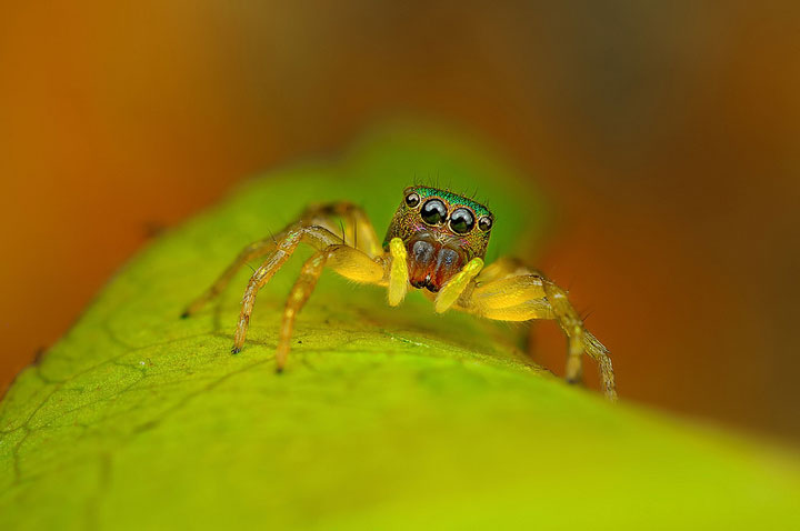 Discover the Beauty Of Spiders Through Microscopic Photographs-19