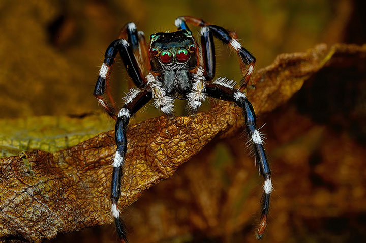 Discover the Beauty Of Spiders Through Microscopic Photographs-20