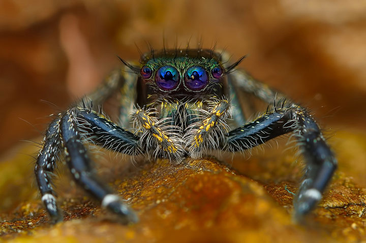 Discover the Beauty Of Spiders Through Microscopic Photographs-21