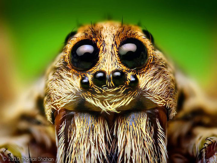 Discover the Beauty Of Spiders Through Microscopic Photographs-22